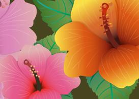 Hibiscus Flowers  Free Vectors