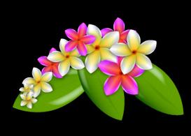 Plumeria Vector Flowers - Free Vectors